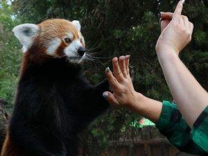 W ferie w zoo można skorzystać z wycieczki z przewodnikiem (fot. mat. Fb Śląski Ogród Zoologiczny)