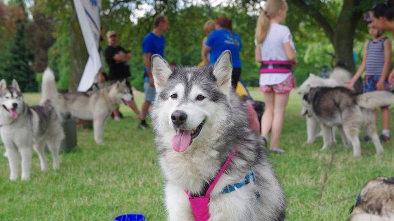 Obok szeregu atrakcji organizatorzy przewidzieli również zawody sportowe z psami, dogtrekking i canircross (fot. mat. organizatora)