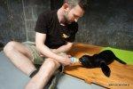 Narodzony we wrocławskim Zoo kotik afrykański (fot. mat. Zoo Wrocław)