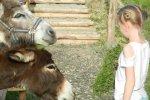 Osiołki cieszyły się bardzo z przybycia nowych gości. (fot. ola)