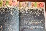 """""""Niezłe ziółko/Głośne zniknięcie"""" to świetne kryminalne opowiadania od wydawnictwa Kocur Bury (fot. Ewelina Zielińska)"""