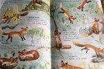 Gruby papier, solidne wykonanie i ciekawa szata graficzna to mocne atuty książki (fot. Ewelina Zielińska/SilesiaDzieci.pl)