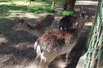 Jedną z największych atrakcji Parku Kuronia jest mini zoo (fot. Katarzyna Esnekier/SilesiaDzieci.pl)