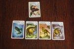 Spośród swoich kart musimy wytypować jedną i umieścić w odpowiednim miejscu na stole (fot. Ewelina Zielińska)
