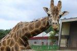 Jedną z atrakcji Parku Śląskiego jest Śląski Ogród Zoologiczny, który również znajduje się na rodzinnym zaproszeniu, które można wygrać w naszym konkursie (fot. materiały Parku Śląskiego)