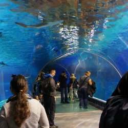 Największą atrakcją Afrykanarium jest 20-metrowy tunel akrylowy (fot. mat. Zoo Wrocław)