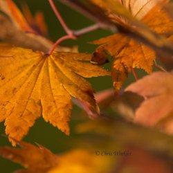 Ciekawostki o liściach to temat sobotniego spotkania w Muzeum Górnośląskim (fot.foter.com)