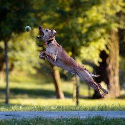 Czworonogi i ich właściwiele mają w Tychach przygotowany specjalnie dla nich park (fot. foter.com)