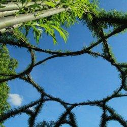 Dzień Wierzby to zabawy i warsztaty na świeżym powietrzu (fot. FB Śląski Ogród Botaniczny w Radzionkowie)