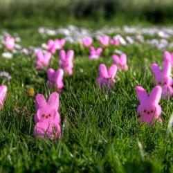 Poszukiwanie niespodzianek w ogrodzie przygotowano w gliwickiej Wilii Caro (fot. foter.com)