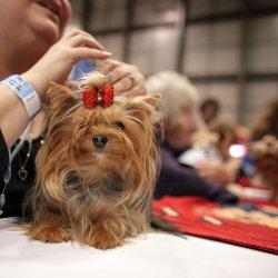 Spośród psiaków jury wybierze najmodniejszego, najsłodszego i najmądrzejszego psiaka (fot. foter.com)