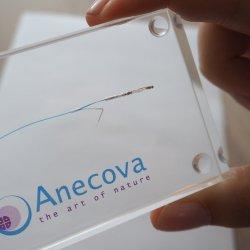 Szwajcarska firmę biotechnologiczna Anecova opracowała sztuczną metodę zapłodnienia, ale bliższą do naturalnej niż in vitro (fot. mat. prasowe)