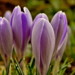 Miejmy nadzieję, że uczestnicy spotkania odnajdą wyczekiwaną przez wszystkich wiosnę (fot. pixabay)
