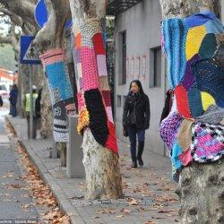 Jednym z działań, które odbędą się w ramach projektu będzie ubieranie drzew w kolorowe swetry (fot. mat. organizatora)