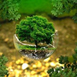 W  korzeniach drzewa umieszczono siedziska, na których będzie można odpocząć (fot. mat. pixabay)