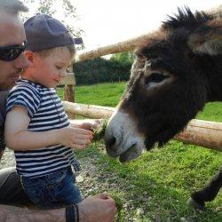 Wbrew zapewnieniom producenta, super gadżet nie odróżnia płaczu dziecka od ryku osła     (fot. alex)
