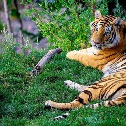 Śląskie zoo obecnie zamieszkuje 8 gatunków dzikich kotów (fota. mat. pixabay)