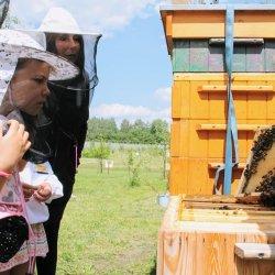 Podczas zajęć uczestnicy zajrzą do ula (fot. mat. Fb Pasieka Edukacyjna - Skrzydlaci Przyjaciele)