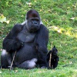 Filip przyjechał do nas z Holandii (fot. materiały Śląskiego Ogrodu Zoologicznego)