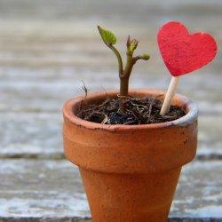Każdy uczestnik warsztatów zabierze ze sobą do domu własnoręcznie ozdobioną doniczkę wraz z roślinką (fot. pixabay)