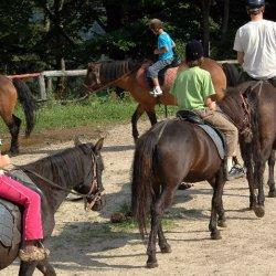 Hucuły, to konie górskie o łagodnym usposobieniu (fot. materiały Stadniny Koni Fero)