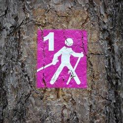 W zdrowym ciele zdrowy duch, dlatego warto zadbać o zdrowe nawyki już od najmłodszych lat (fot. pixabay)