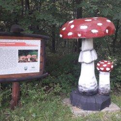 fot. Agnieszka Mróz/SilesiaDzieci.pl