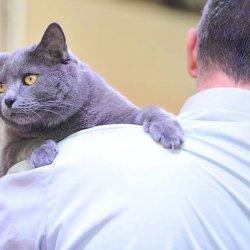 Pokazy kocich piękności odbędą się w niedzielę w Europie Centralnej (fot. materiały prasowe)