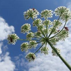 Piknik odbędzie się w Śląskim Ogrodzie Botanicznym w Radzionkowie (fot. mat. organizatora)