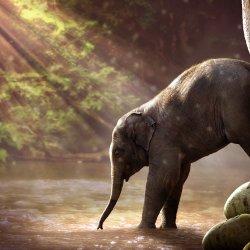 14 kwietnia obchodzony jest Dzień Ochrony Słoni (fot. mat. pixabay)