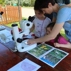 W programie znajdą się m.in. warsztaty pszczelarskie, rękodzieła i mikroskopowe (fot. mat. organizatora)