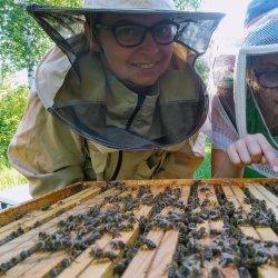 Zajęcia pszczelarskie dla całych rodzin odbędą się w dwóch terminach w Muzeum Śląskim (fot. mat. organizatora)