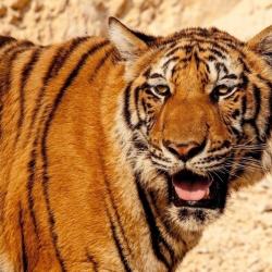 O zwierzętach z dalekiej Azji dowiecie się na zajęciach w Starym Magistracie (fot. foter.com)