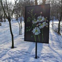 Róże z fotografii rosną w Ogrodzie Botanicznym PAN w Powsinie, gdzie znajduje się najwięcej gatunków róż w Polsce (fot. mat. organizatora)