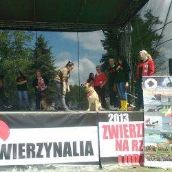 Miłośnicy psów będą zachwyceni - to impreza własnie dla nich (fot. materiały organizatorów)