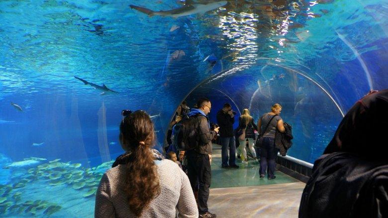 Jedną z największych atrakcji wrocławskiego Afrykarium jest podwodny tunel (fot. mat. ZOO Wrocław)