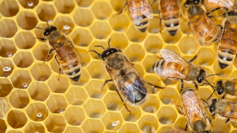 Degustacja miodów i możliwość zajrzenia do wnętrza ula czeka na dzieci na warsztatach w Moodro (fot. foter.com)