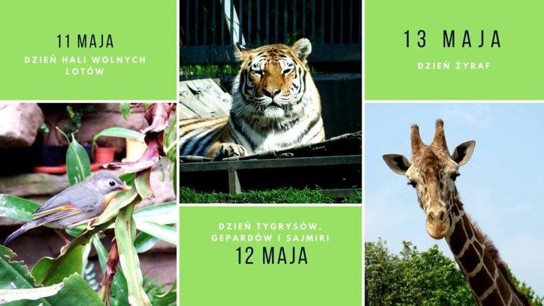 Każdy dzień, poświęcony innym zwierzakom, obfitować będzie w niezwykłe atrakcje (fot. mat. organizatora)