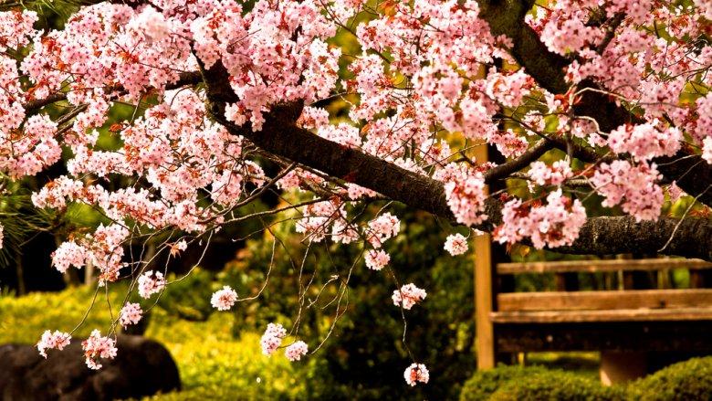 Najbliższy weekend w CH Stara Kablownia przybliży nam kulturę Japonii (fot. foter.com)