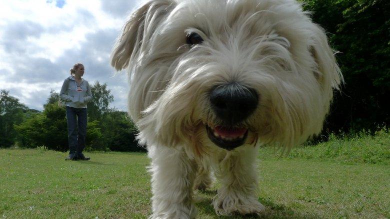 Rodzinne biegi z psami odbędą się 20 maja (fot. foter.com)