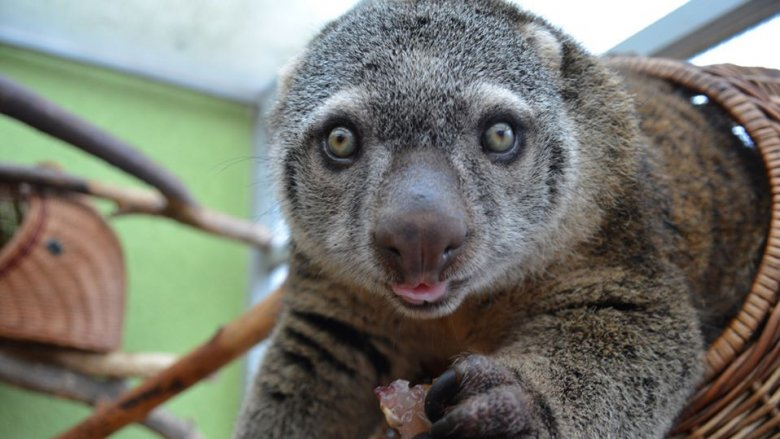 Zoo Wrocław zaprasza na transmisje na żywo na Facebooku (fot. mat. organizatora)