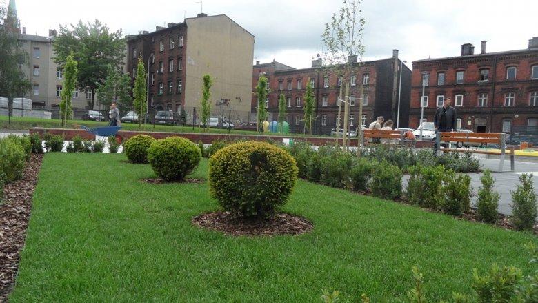 Na skwerze  zasadzono niemal 30 drzew i ponad 1300 krzewów (fot. mat. UM Chorzów)