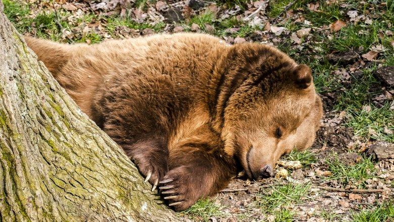 28 października dowiecie się jak do zimy przygotowuje się Śląskie ZOO (fot. pixabay)