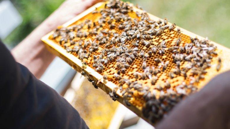 Tego dnia w skansenie odbędą się m.in. warsztaty pszczelarskie (fot. pixabay)