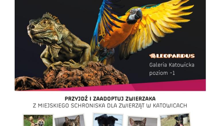 Edukacyjna akcja schroniska i sklepu Leopardus to ciekawa propozycja na spędzenia Dnia Dziecka (fot. mat. organizatora)