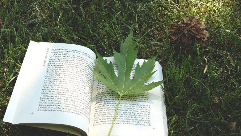 """""""Biblioteka pod chmurką"""" to nie tylko czytanie w plenerze (fot. pixabay)"""