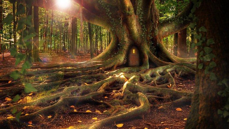 Młodzi widzowie wraz z leśniczym spróbują uratować usychający las (fot.pixabay)