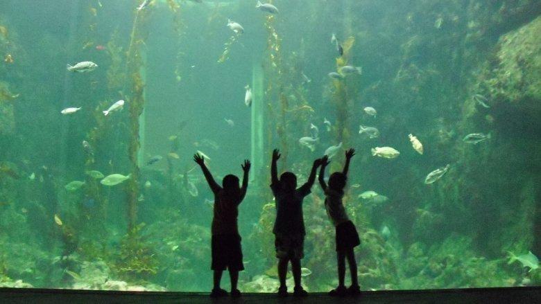 Na warsztatach w Muzeum Górnośląskim stworzycie podwodny świat (fot. pixabay)