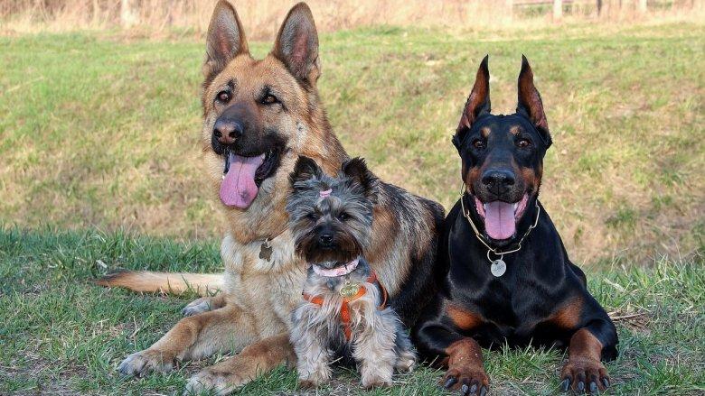 Woofstock to miejsce gdzie świetnie bawią się zarówno psy, jak ich właściciele (fot. pixabay)