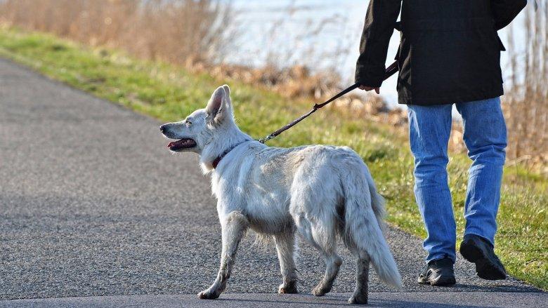 Sobotni spacer to świetna okazja, by pomóc psom ze schroniska (fot. pixabay)